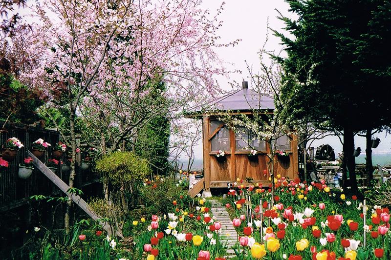 春のテラスの写真