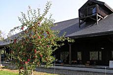 果樹園の写真